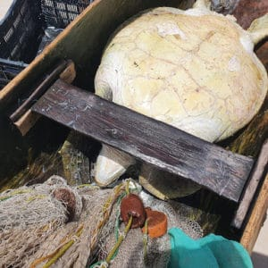 Sea turtle rescued from fishermen in a protected area