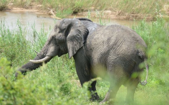 Poaching: A Controversy